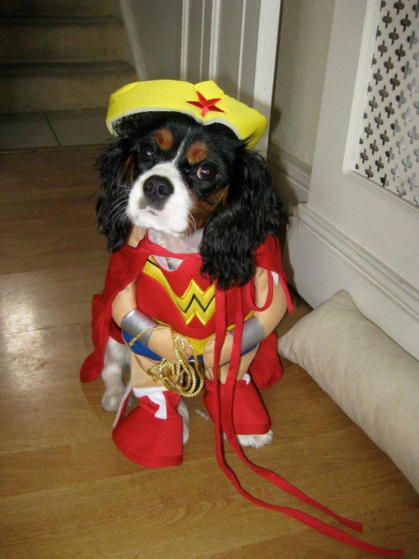 Or Not Dog Costumes Dog Clothes Dogs