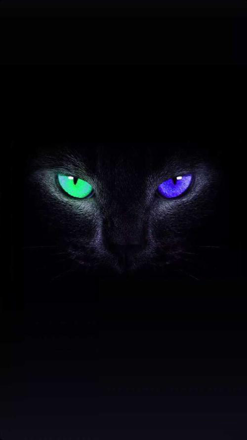 Exquisite Iphone Wallpaper Makes The Phone More Perfect Laryoo Animal Wallpaper Black Cat Art Iphone Wallpaper Landscape