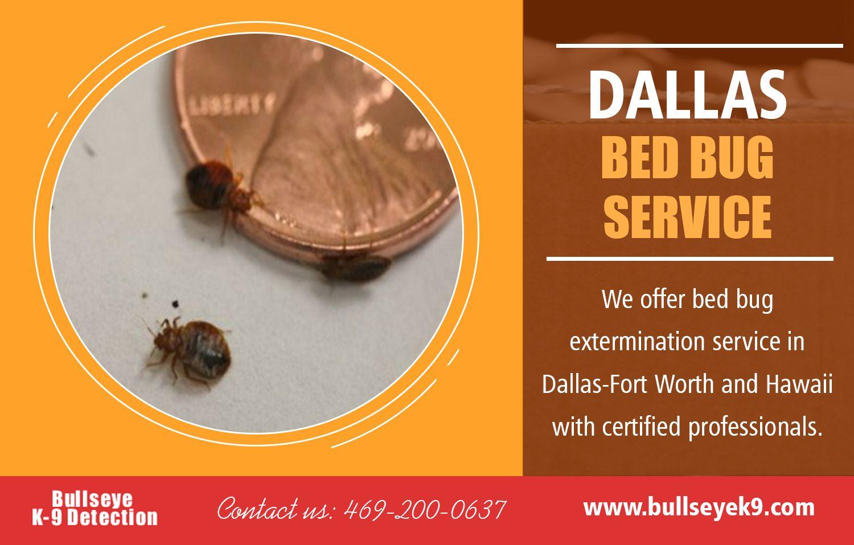 Dallas bed bug service expert will kill insect eggs hiding