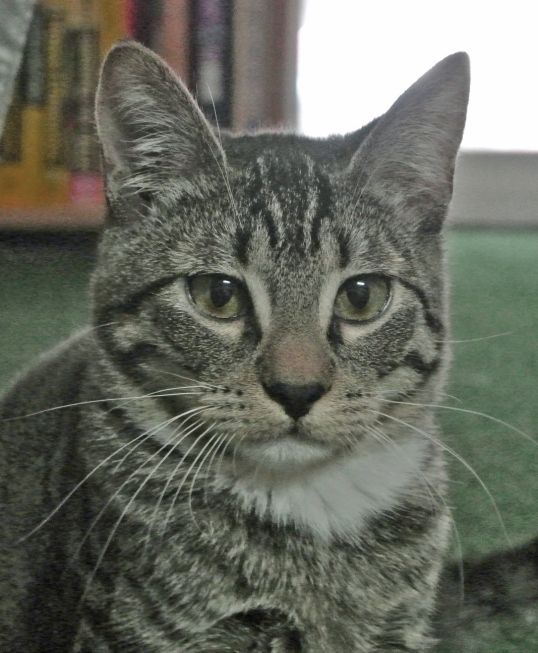 Update Contact Info Ready Paw It Forward 4 Special Need Cats