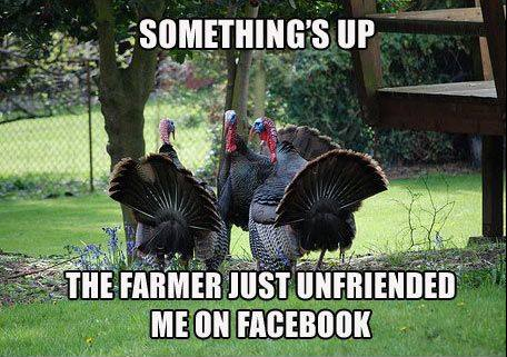 Even Turkeys Love Facebook Http Ow Ly 10prcs Facebook Thanksgiving Turkey Mo Funny Thanksgiving Pictures Happy Thanksgiving Memes Funny Turkey Pictures