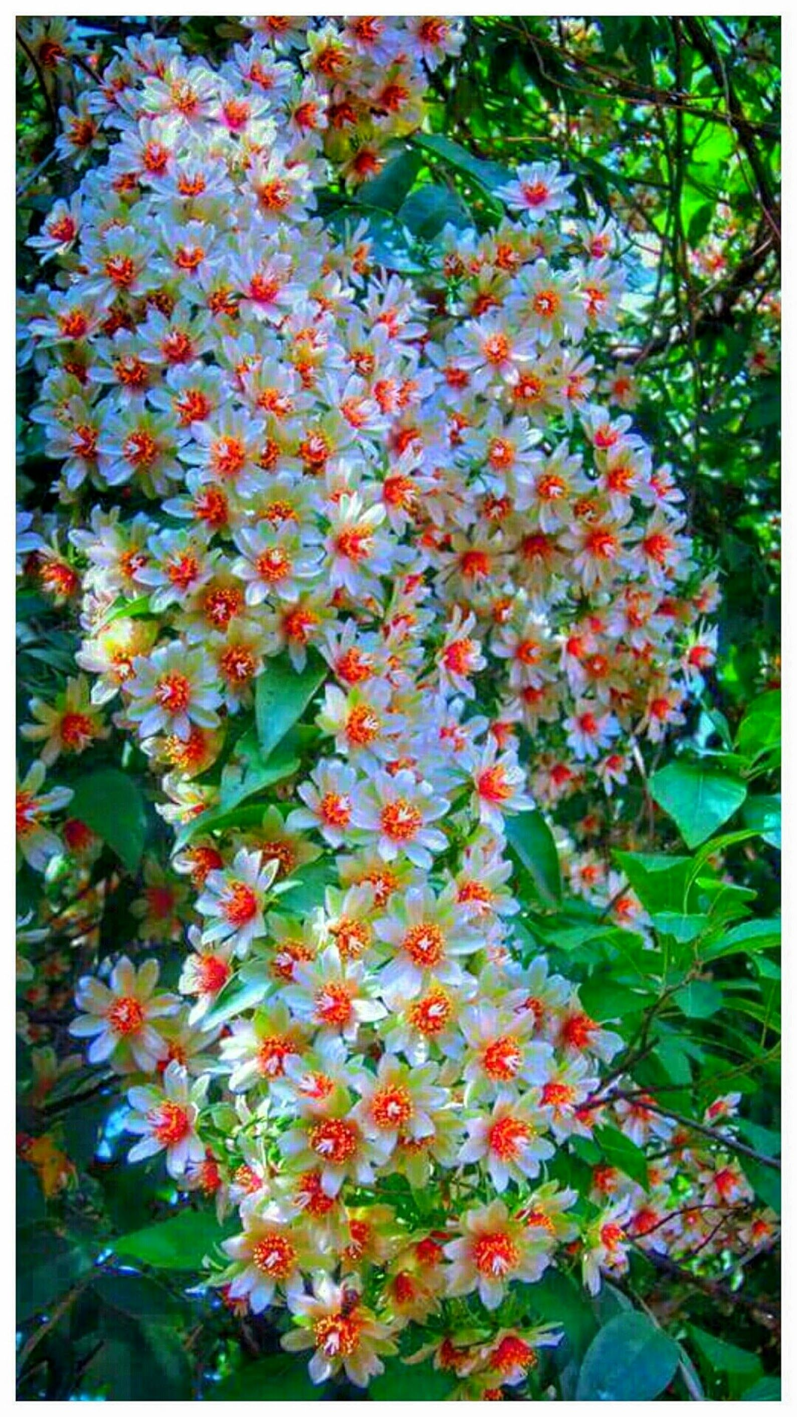 Good Night Friends With Pretty Flowers Sulakshna