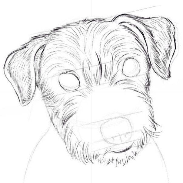 how to draw a dog step by step now we will see how to draw a small dog with a pencil in stages step by step