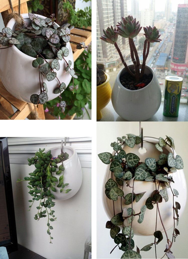 Sukkulente bertopf fristee kaktus blumentopf keramik mini rund hydrokultur wandh ngende - Zimmerpflanzen sukkulenten ...