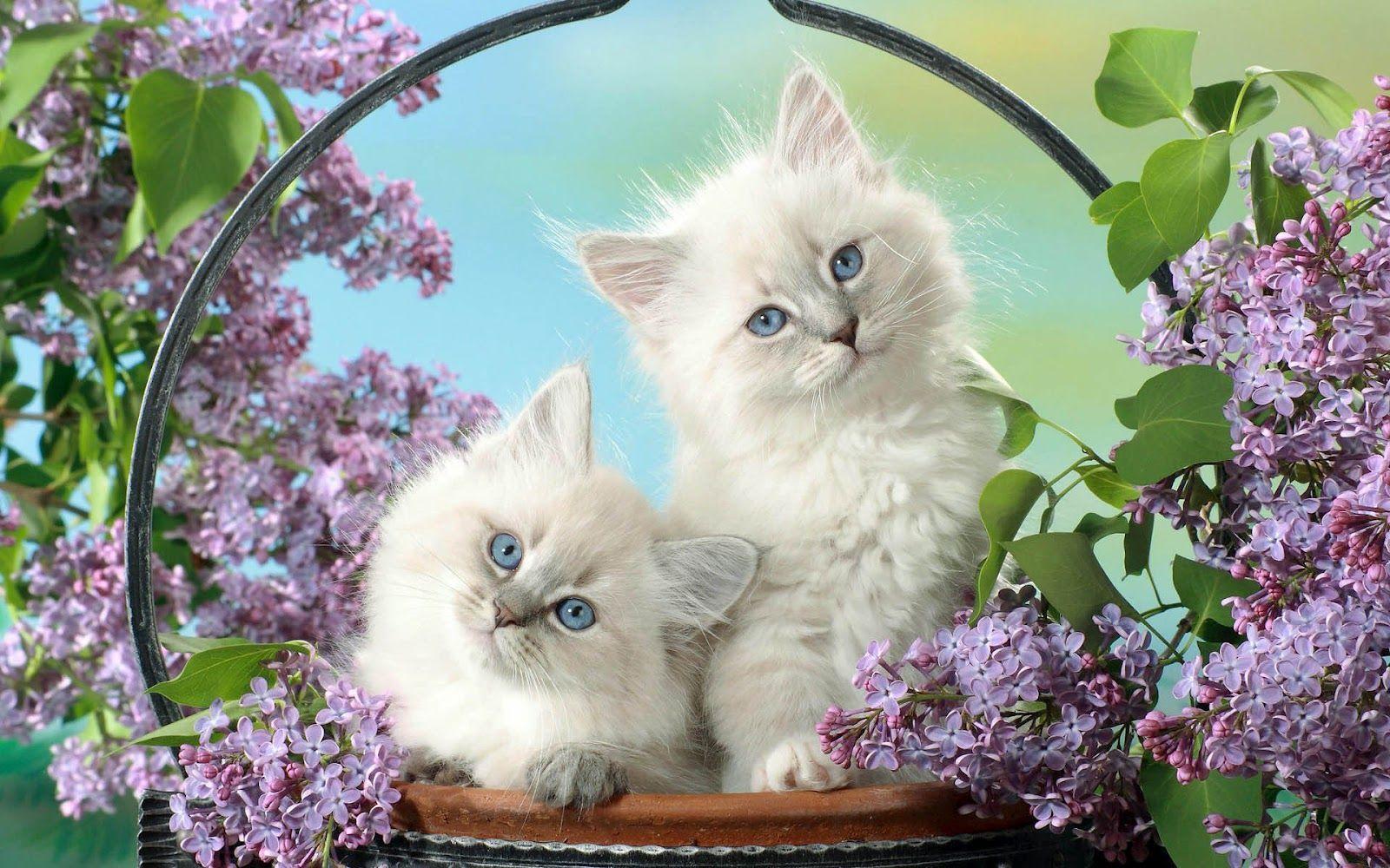 cat wallpapers - impremedia