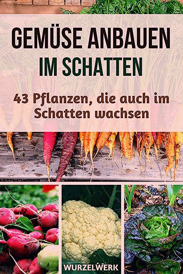 Photo of 43 Kräuter, Obst- und Gemüsepflanzen, die auch im Schatten wachsen – Wurzelwerk