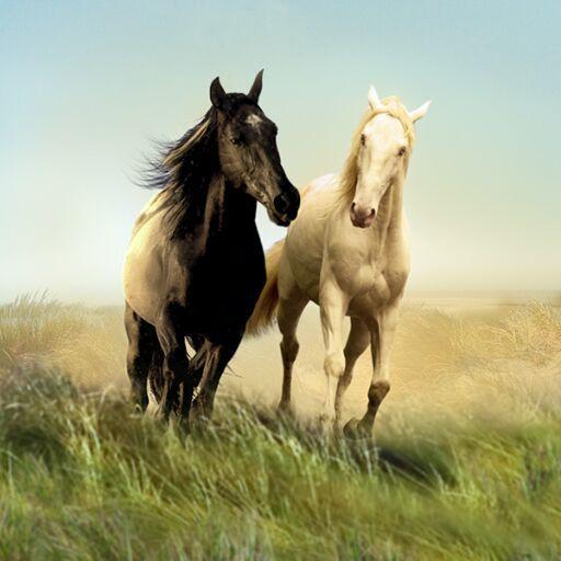 ostwind und 33  horses animals and pets animals