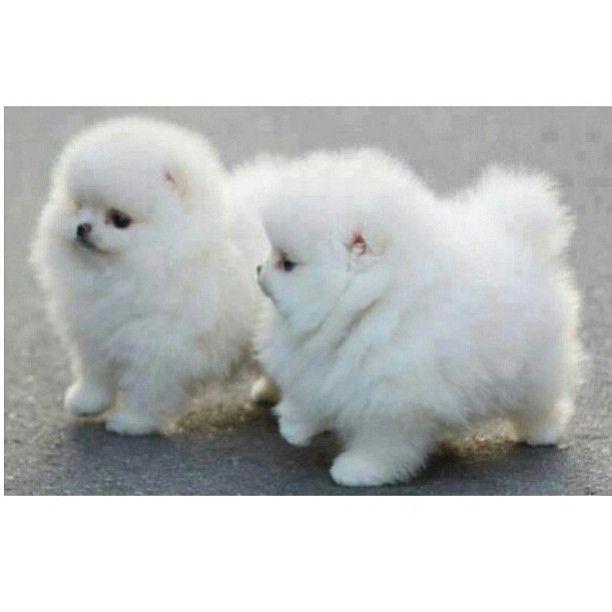 #instafollow #tagsforlikes #tweegram #followme #followforfollow #love #picoftheday #instagood #instalike #instadaily #swag #food #cars #trucks #xbox #iphone #camera #frog #funny #9gag #meme #twitter #facebook #tumblr #foursquare #flickr #dogs #puppy #pupp | Flickr - Photo Sharing!