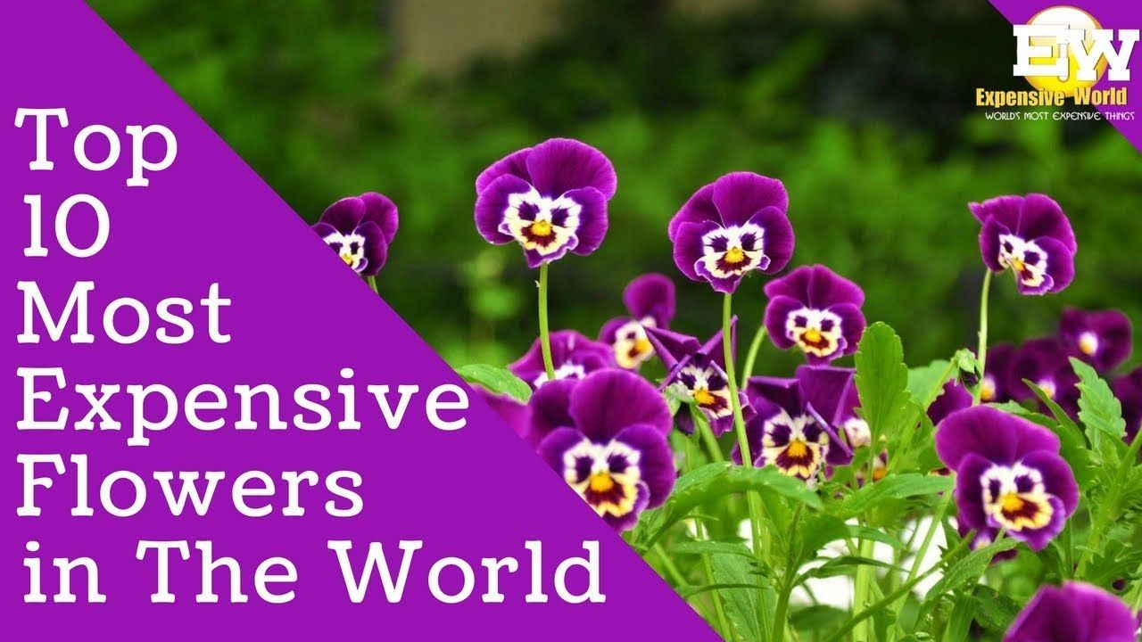10 Most Expensive Flowers In The World Top 10 Interesting Facts