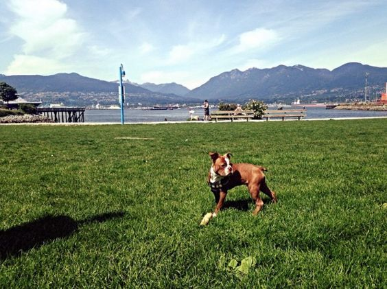 10 Hip Dog Parks Near Downtown Vancouver Dog park