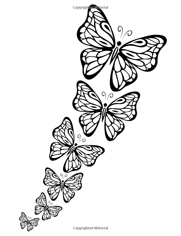 Butterfly Papillon Mariposas Vlinders Wings Graceful Amazing