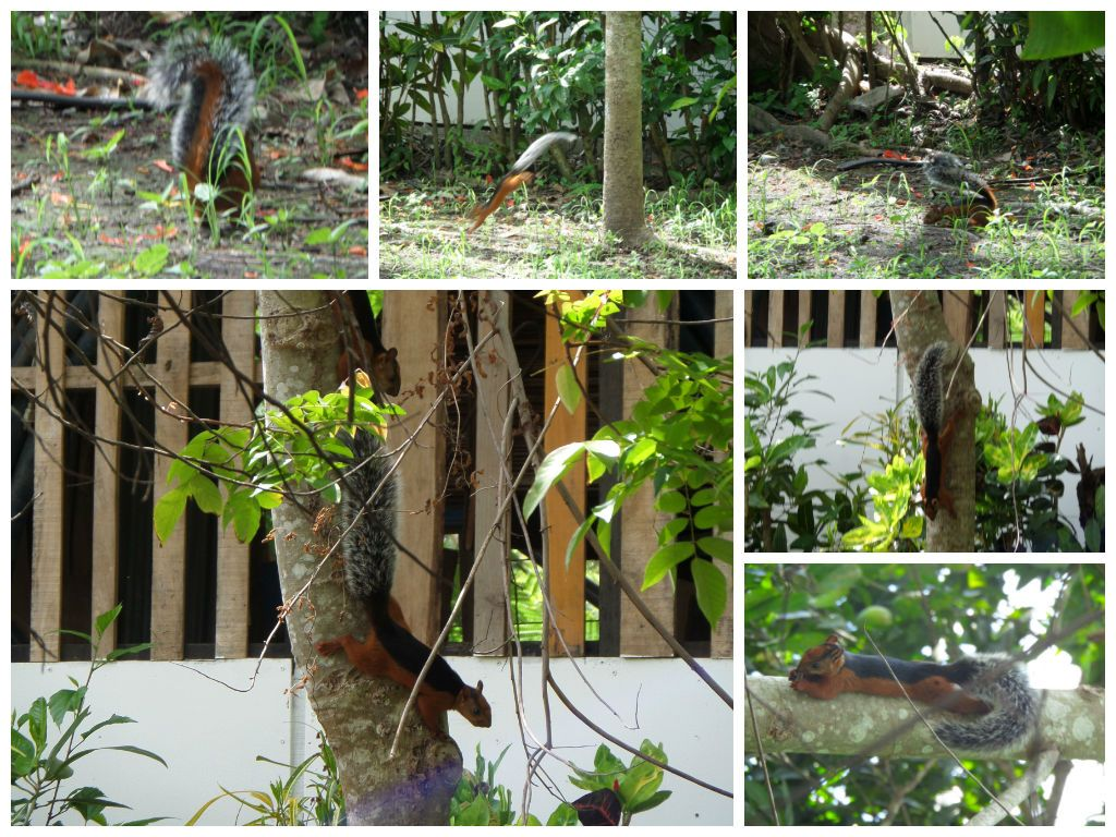 Squirrels that live on his fruit trees!
