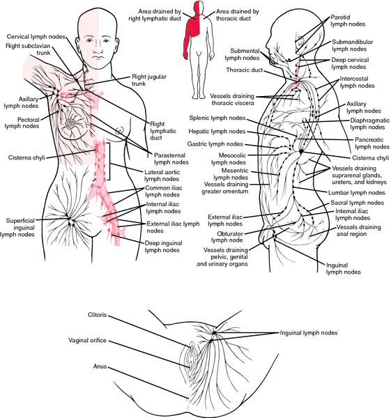 lymphatic aplasia