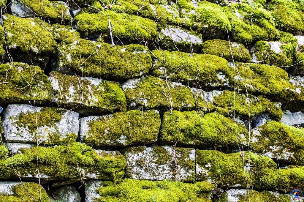 Mossy stone wall.