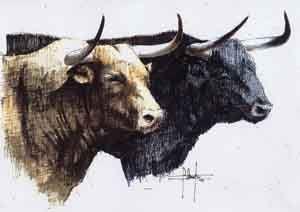 Toro De Lidia Dibujo Buscar Con Google Toros Drawings Moose