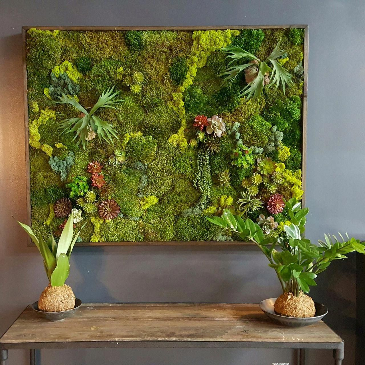 » Your Questions About Moss Walls Answered