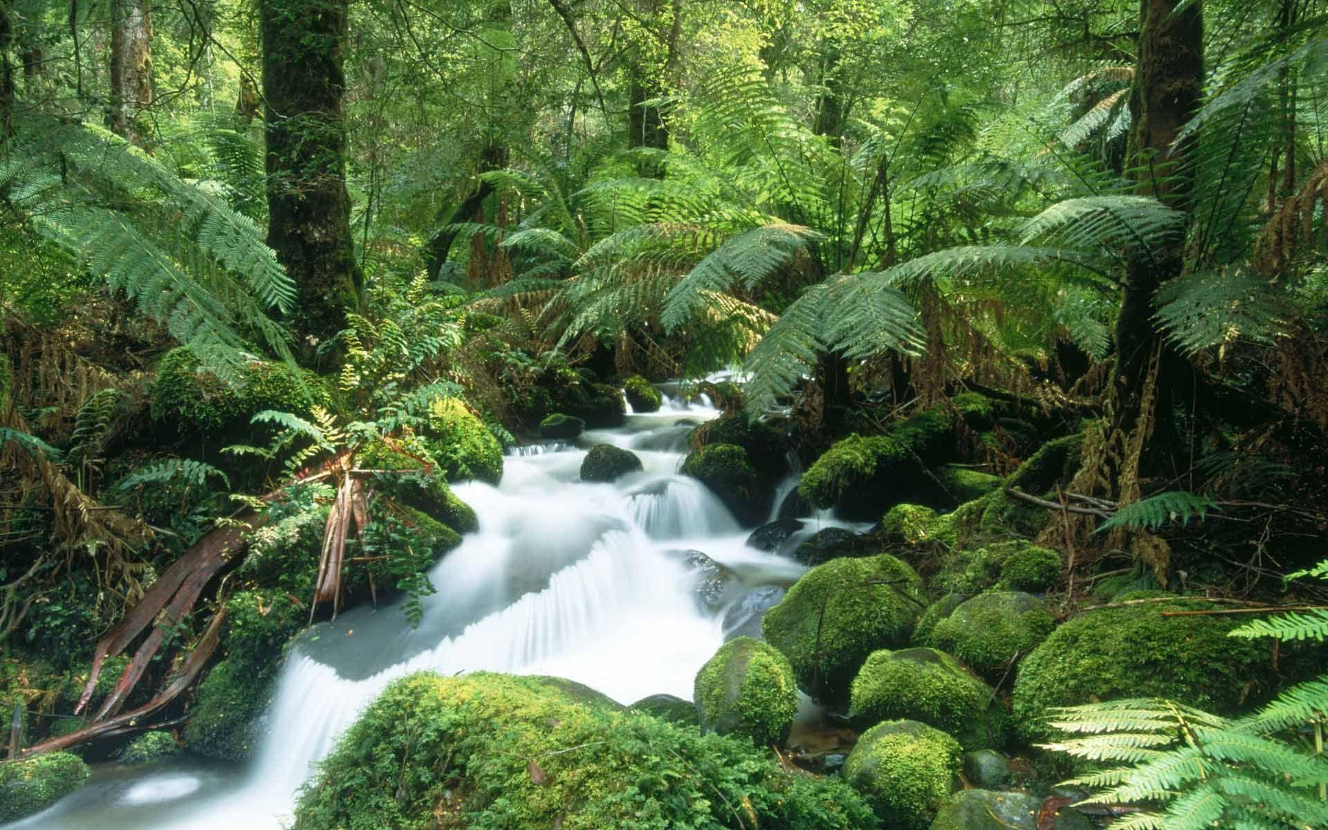 Fond D Ecran Torent En Pleine Nature Wallpaper Fond D Ecran Cascade Les Cascades Foret Tropicale
