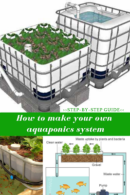 How To Build An Aquaponics System is part of Aquaponics system, Aquaponics, Aquaponics diy, Aquaponic gardening, Hydroponic gardening, Fish farming - Nutrition is highly important for a good health  Unfortunately, less healthy food is available on the market, while the fatty, semiprepared food ha…