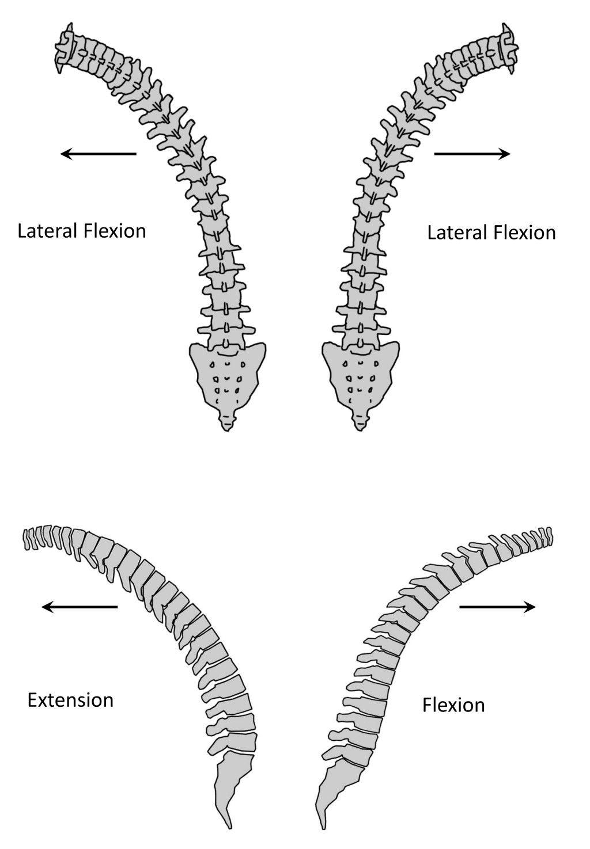 http://www.cea1.com/wp-content/uploads/2013/10/vertebra-prominens ...