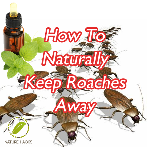 How To Naturally Keep Roaches Away Cypress Oil Herbs Natural Pest Control