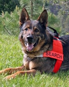 Hero Search And Rescue Dogs Rescue Dogs