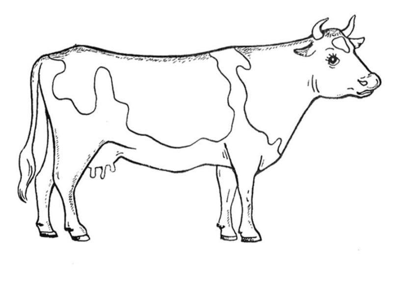 Kuh Ausmalbild Ausmalbilder Für Kinder корова у 2019 р Cow