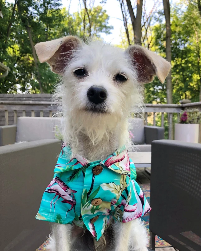 Flamingo Fresh Bbq Shirt Matching Sizes For Dogs Humans Flamingo Print Dogs Your Dog