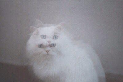 double cat//