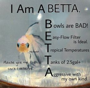 Helpful For New Fish Owners Pet Fish Betta Betta Fish Care