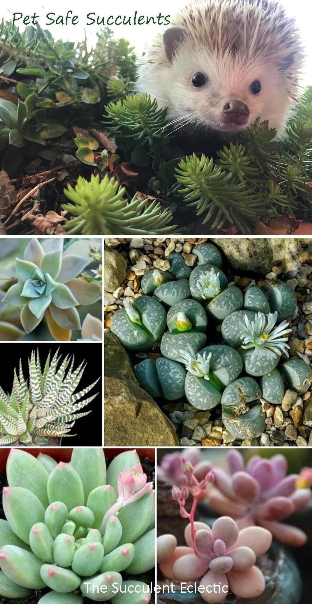 Did You Know That Some Succulents Are Toxic To Your Pets Learn All About How