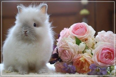 ラビッツブログ Rabbits ラビッツ うさぎブリーダー専門店 大阪 子犬 画像 うさぎ 動物