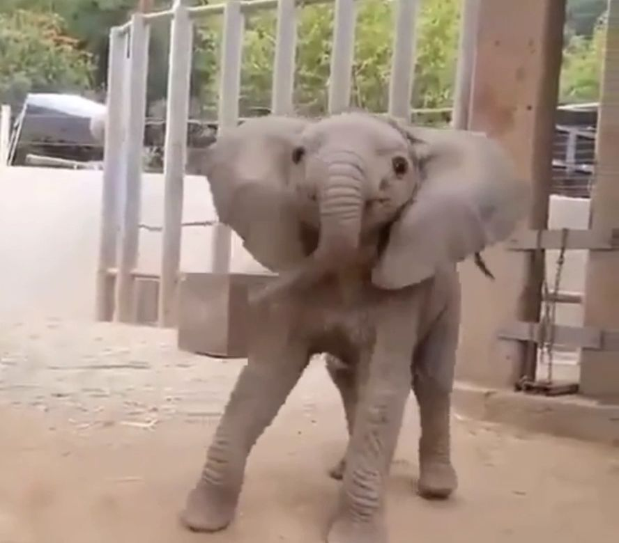 #elephant #baby #cute #animals