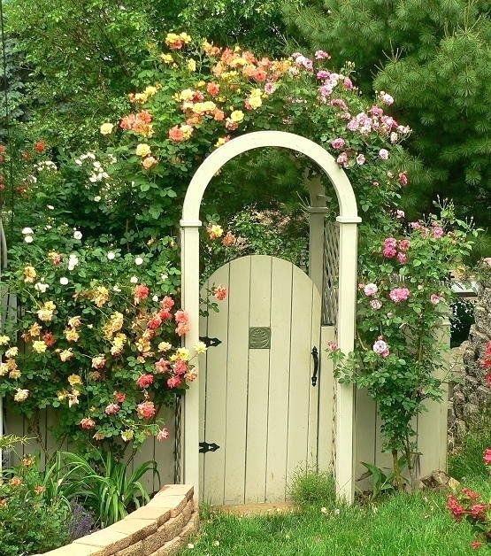 garden gtes coat climbing rose on cottage garden style