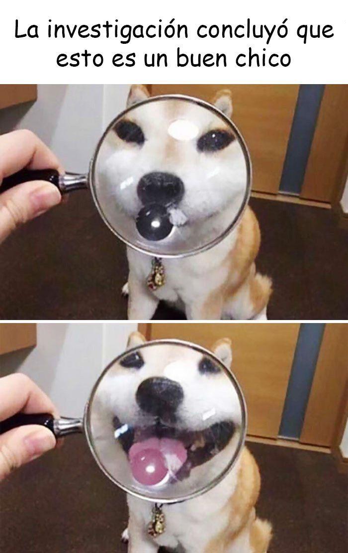 20 Divertidos Memes De Perritos Que Prometen Quitarte Toda La Tristeza Memes Perros Memes De Perros Chistosos Memes Divertidos Sobre Perros