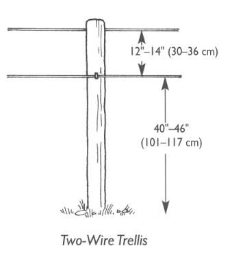 grape trellis plans one wire trellis mostly for raisin or table