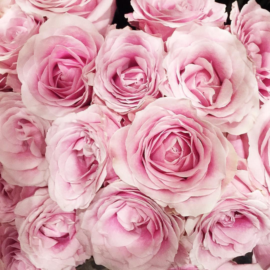 We deserve flowers everyday! #happywomensday  Todo dia é dia de valorizar a mulher porque vamos combinar que a gente arrasa né? #girlpower #felizdiadamulher by camilacoutinho