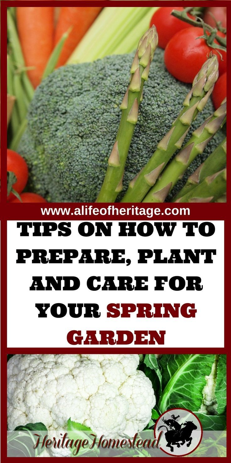 How To Do Organic Farming At Home Spring garden