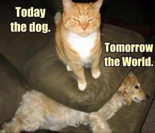 Today the dog. Tomorrow the world!