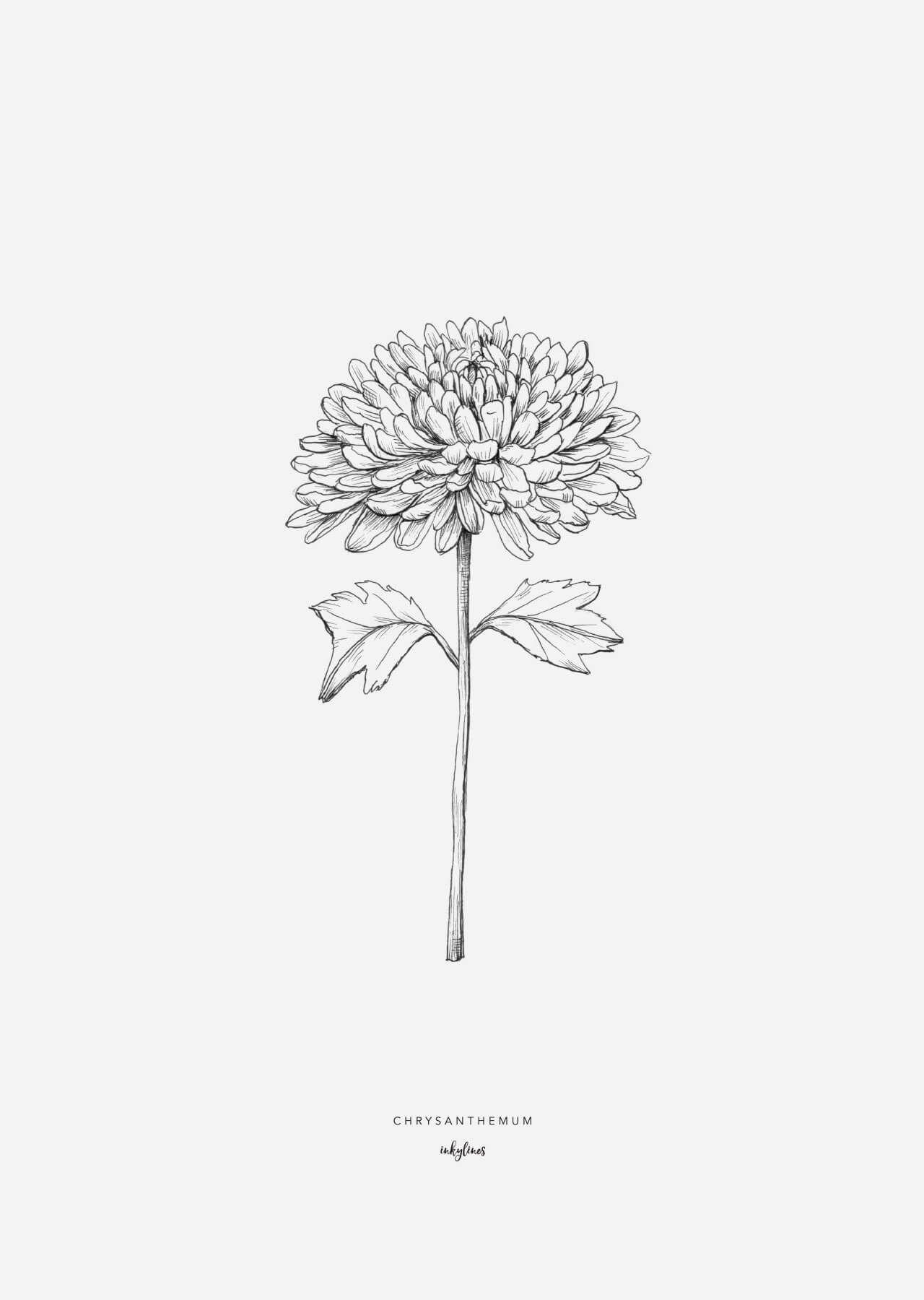 Printables Chrysanthemum Chrysanthemum Tattoo Birth Flower Tattoos Chrysanthemum Flower Tattoo