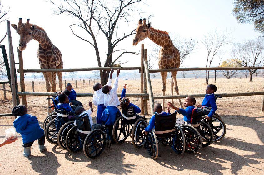 qrsun.fr, les petites annonces gratuites #zoo