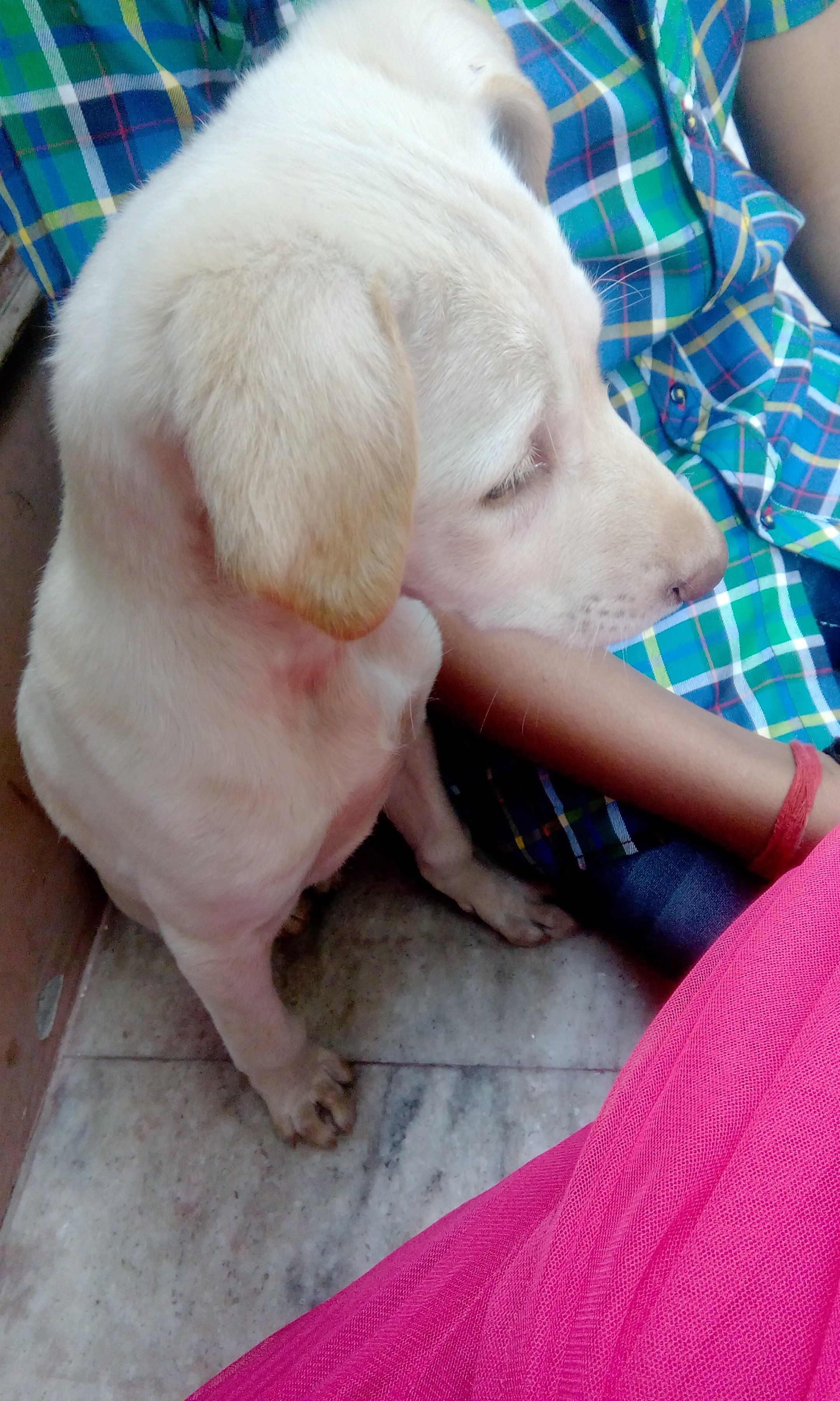 Abhishek Joshi Dog Blog Pet Blog Dog Adoption