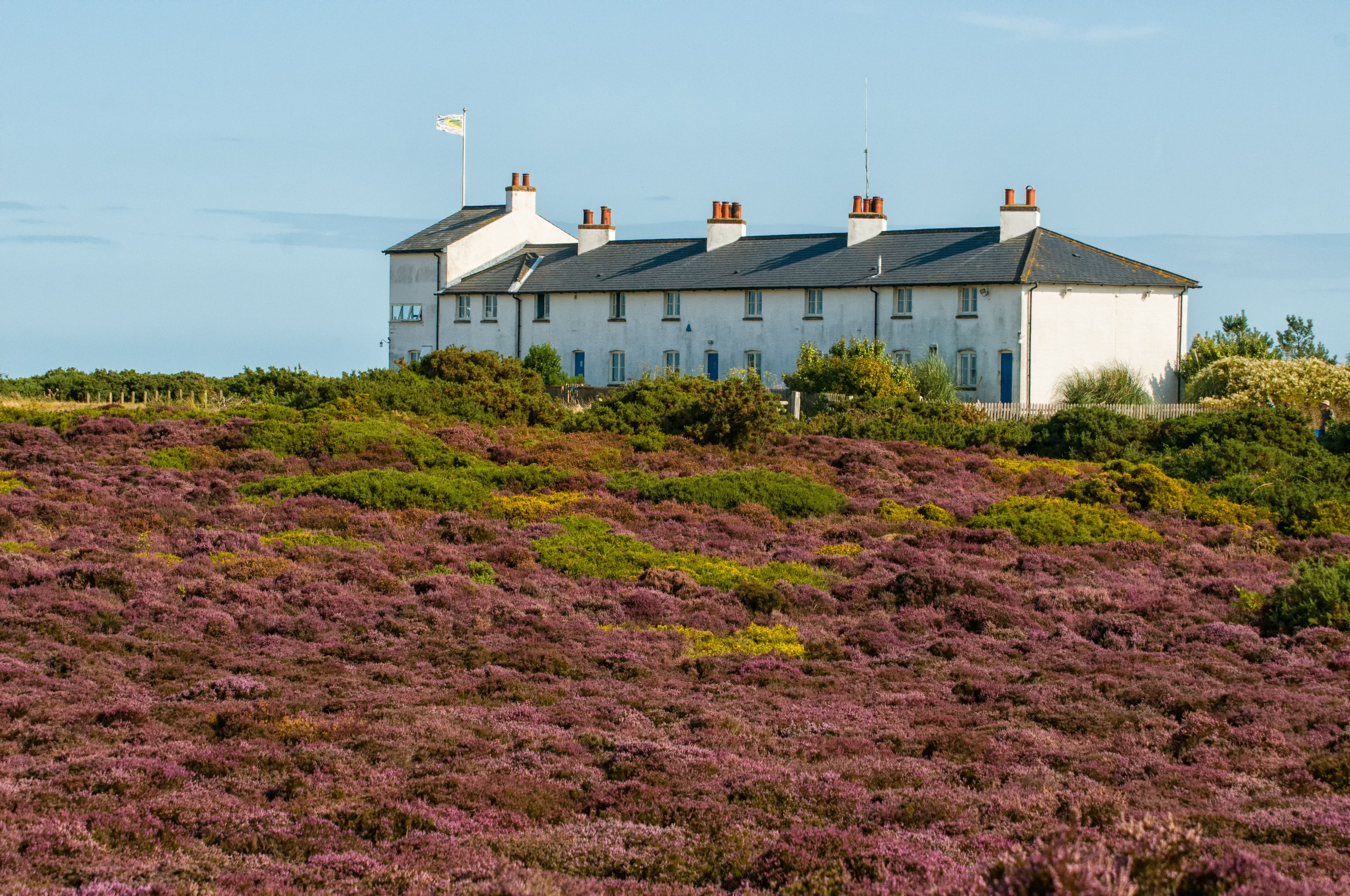 The Coastguard Cottages At Dunwich Heath Overlook The National Trust S Area Of Heathland Conservation And The Eroding Cliffs Of Dunwich Heath England Suffolk
