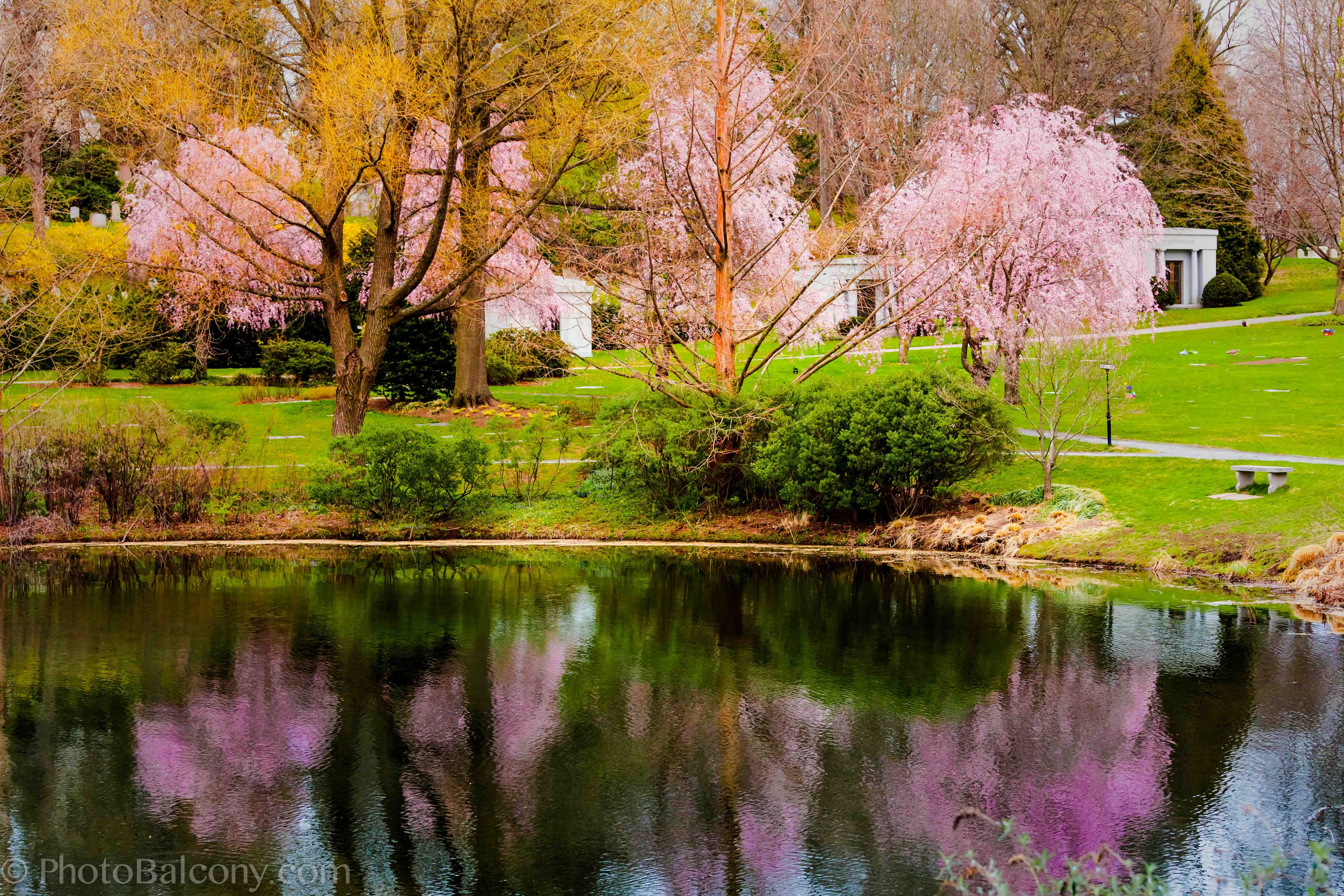 Images of spring welcome spring season spring pinterest scenery welcome spring season mightylinksfo Gallery
