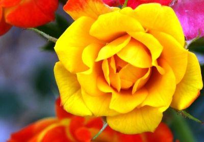 Beautiful flowers and their names beautiful flowers pinterest beautiful flowers and their names mightylinksfo