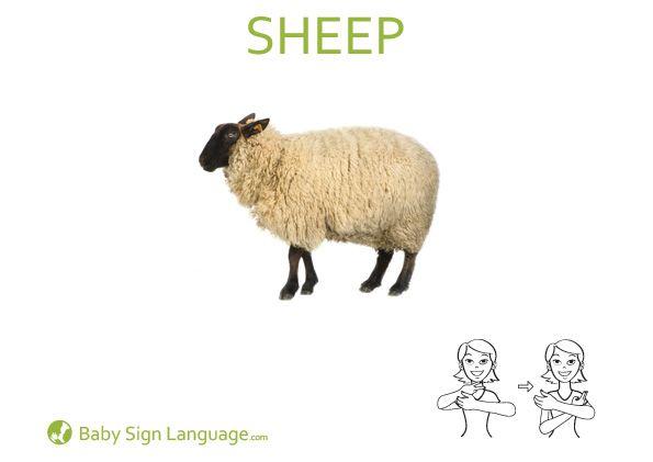 Sheep Baby Sing Pinterest Sign Language Baby Sign Language