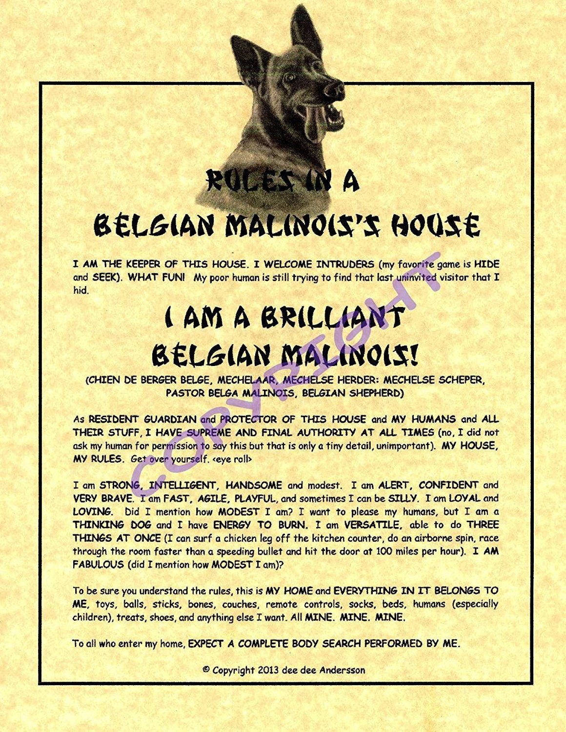 Rules In A Belgian Malinois 39 House Malinois Belgian