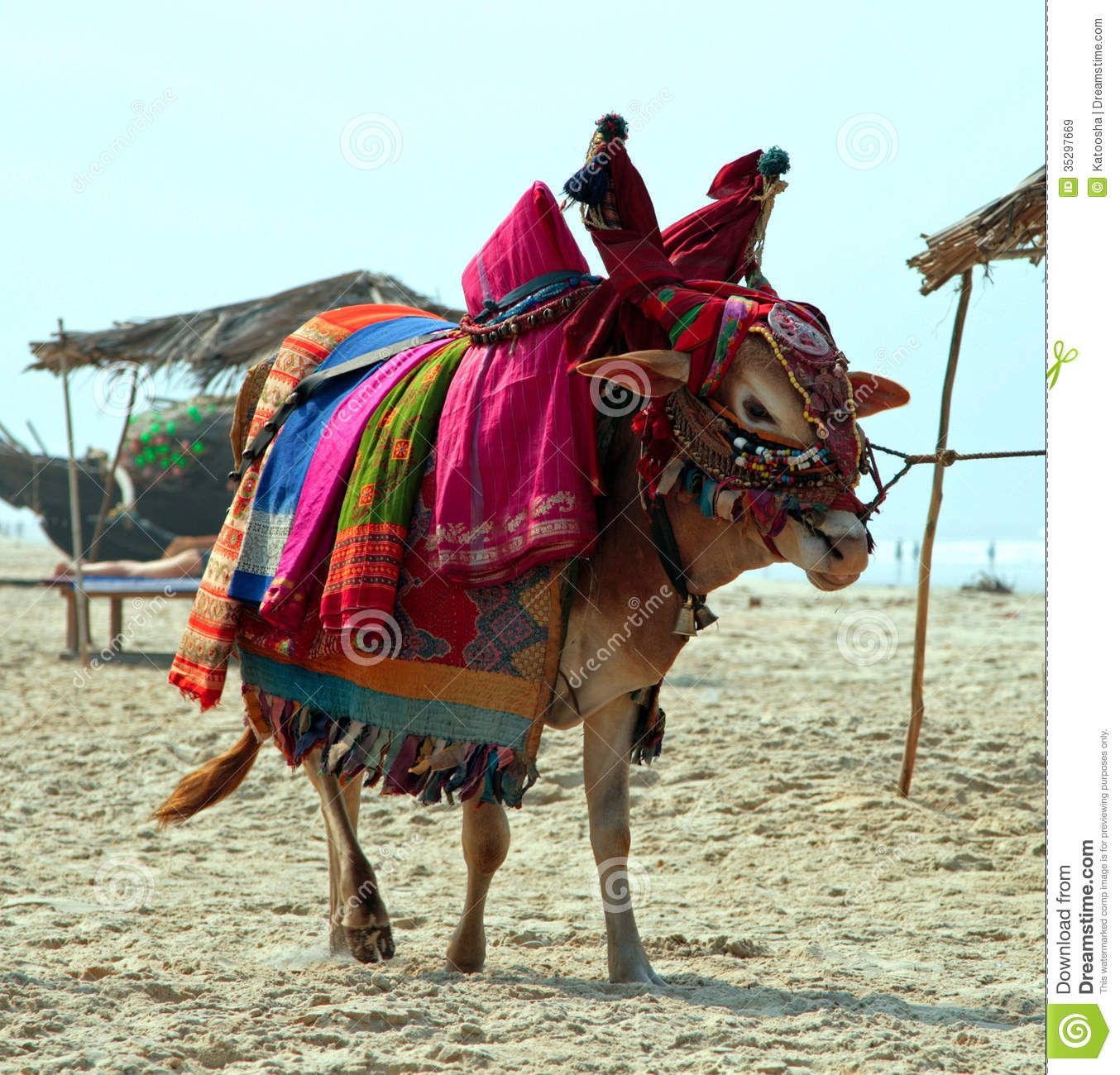 Indian Sacred Cow On The Beach - Download From Over 26 Million High Quality Stock Photos, Images, Vectors. Sign up for FREE today. Image: 35297669
