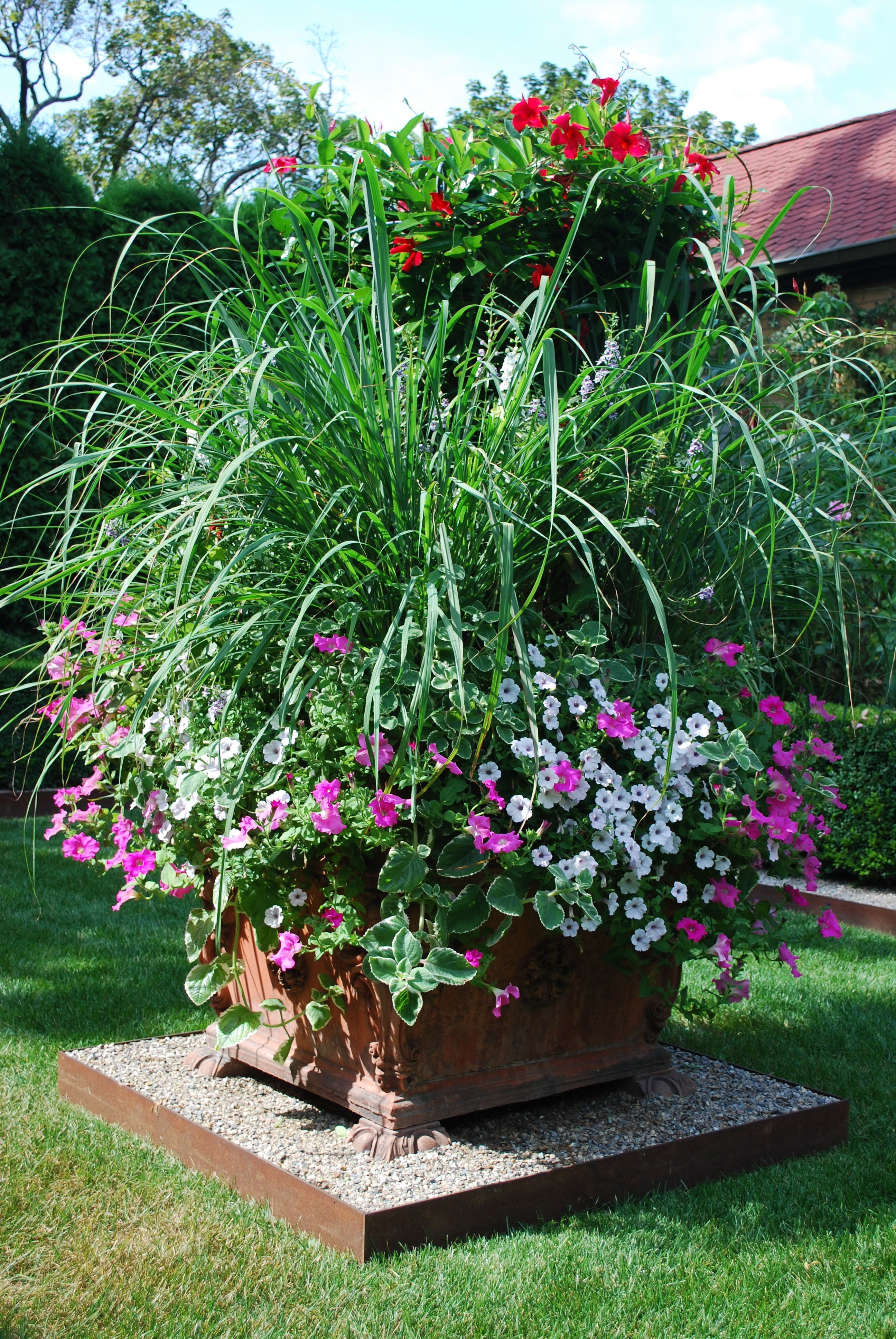 Lemon Grass And Petunias Jpg Flowers Pinterest Jardiner A  ~ Macetas Originales Para El Jardin