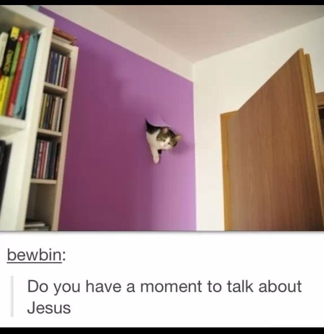 Pin By Hanna Patterson On Hah Funny Cat Photos Funny Cat Pictures Funny Cat Memes