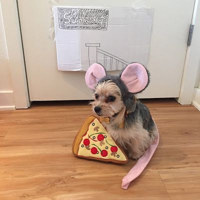 Pizza Rat Dog Costume With Images Cute Dog Costumes Rat Dog